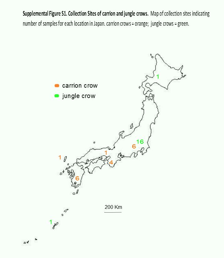 Patterns Of Evolution Of Mhc Class Ii Genes Of Crows Corvus